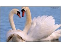 20张高清自然生态图片素材
