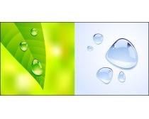 精美绿叶水珠时时彩平台娱乐