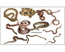 多款蛇图片素材
