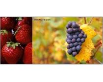 11张高清水果图片