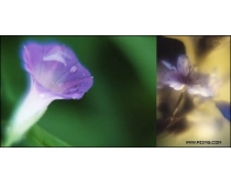 16張高清花卉特寫圖片素材