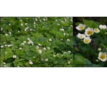 草霉花朵高清图片素材