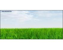 绿色草丛高清图片素材