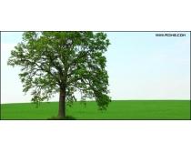 草地大树高清图片