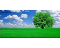 蓝天草地大树高清图片