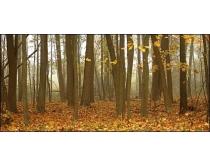 树林落叶高清图片
