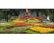 公园花坛风景图片