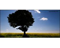 蓝天草地大树风景图片