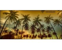 椰林风光高清图片