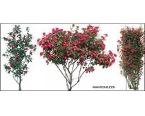 乔木花卉园林配景素材