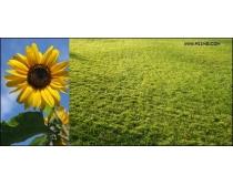 22张自然生态风景高清图片