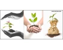5张植物幼苗高清图片