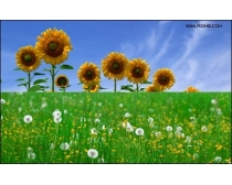 40张植物花朵高清图片