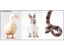 200张高清动物图片