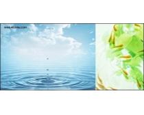 水与植物高清图片系列2