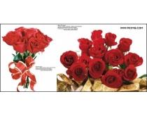 110張玫瑰花高清圖片
