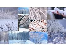 12张冬天树枝高清图片