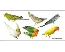 各种鸟类psd素材