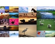 20张自然生态高清图片