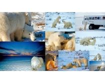 10张北极熊时时彩娱乐网站