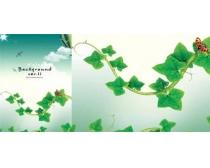 绿色藤蔓psd分层素材