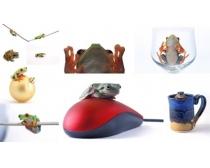 10张青蛙树蛙时时彩娱乐网站