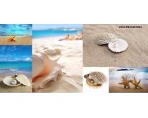 海星贝壳珍珠高清图片(6P)