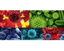 5张细菌病菌高清图片