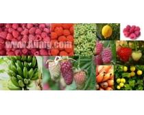 11张水果高清图片