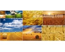 9張麥田風景高清圖片