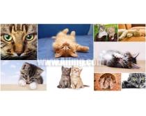 9张猫咪时时彩娱乐网站