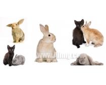 5张猫与兔子时时彩娱乐网站