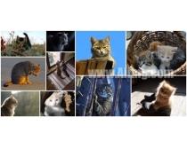 10张小猫时时彩娱乐网站