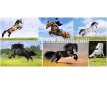 6张马图片素材