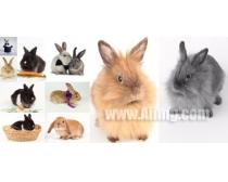 10张兔子时时彩娱乐网站素材