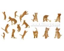 红色猫咪图片素材
