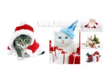 5张圣诞猫时时彩娱乐网站