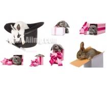 8张兔子与礼物时时彩娱乐网站