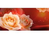 白色玫瑰那我就成全你��花移�T�D案矢量素材