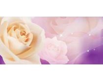 白玫�瑰移�T�D案矢量素材