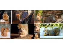 松鼠图片素材