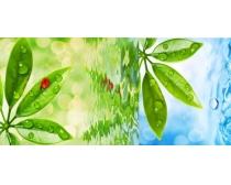 绿叶和水露高清图片素材