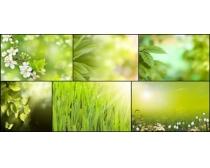 春暖花开高清图片素材