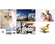 可爱小动物图片素材