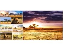 野生动物图片素材