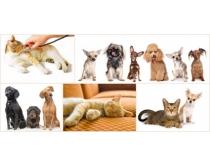 可爱小猫小狗图片素材