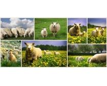 山羊图片素材