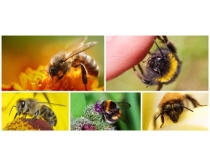 蜜蜂图片素材