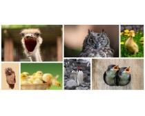 鸟类图片素材