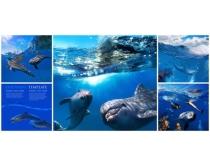 海豚图片素材